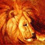 lion-at-rest