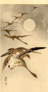 eight-white-fronted-geese-in-flight-full-moon-behind